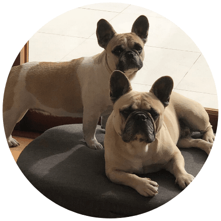 Burge & Isla | Sparrow Insurance